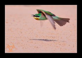 Fly .... low lever fly by ahmedalali