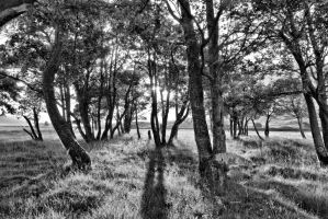 Shadow play in the trees by BusterBrownBB