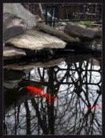 Fish in a Pond by Valr