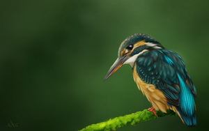 kingfisher study, a.k.a. dat ass by crieduchat