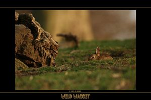 Wild Wabbit by q-118