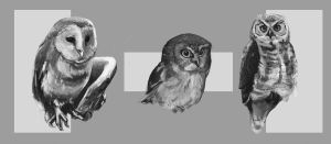 Owl Studies by Eliket