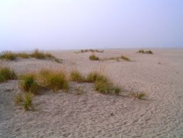 Foggy Beach by ArtistStock