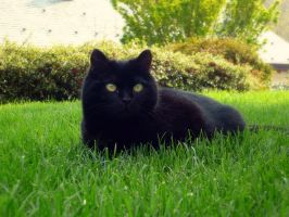 Black cat in Green Grass by Reira86