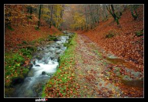 Red autumn by mazmorra