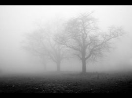 Trees in the fog by jfphotography