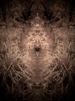 WILD SYMMETRY #2 by ANDYBURGESS