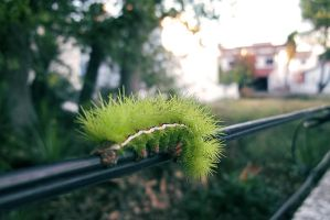 Caterpillar's Spines. by livinladolcevita