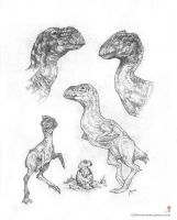 Imaginary Dino's Terrorbirds by MIKECORRIERO