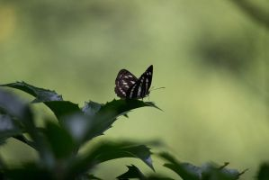 Butterfly 2nd photo by sokiane