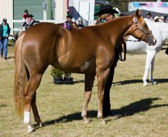 STOCK Canungra Show 2013-39 by fillyrox