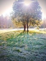 the Morning of First Frost by bluebell-mi
