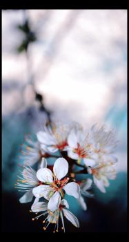 first blossom by whorer-movie