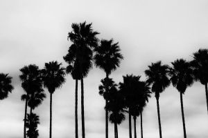 Storm Palms by roarbinson