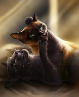 Buddha and Gracie by TamberElla