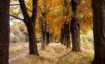 autumn by asia1573