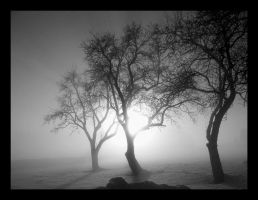 Ghost Trees by pitchblacknight