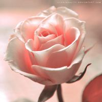 love you less by illusionality