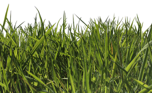 Grass1 by MindSqueeZe