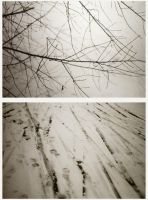 Branches and Footprints by lovetoast