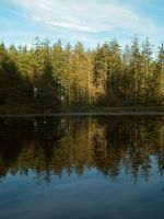 grizedale tarn by harrietbaxter