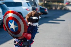 Rocket Raccoon and Cap's Shield by DefyingHell