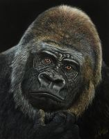 Pastel painting Gorilla by iSaBeL-MR