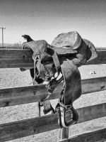 Old Saddle by whendt