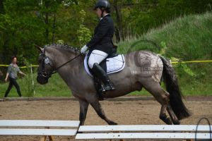 Pony dressage stock 1 by BRls-love-is-MY-Live
