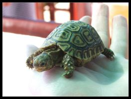 Lil Tortoise. by crazybadger
