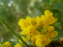 Yellow flowers by thaddman