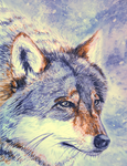 Wolf - watercolor by Tyfflie