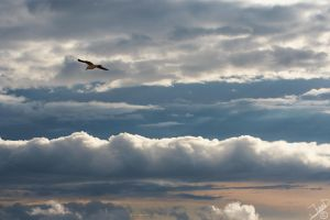Fly into by neodium