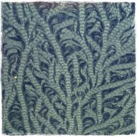 Frost Pattern II by MadeByHand