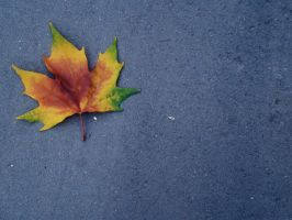 second leaf of autumn by propan3