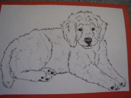 Goldendoodle puppy by Tianithen