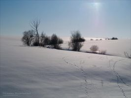 Wintry Fields Forever by rici66