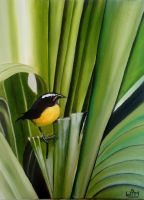 Bananaquit 4 by WendyMitchell