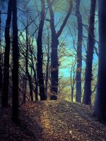 Premade BG Charmed Forest 0.1 by E-DinaPhotoArt