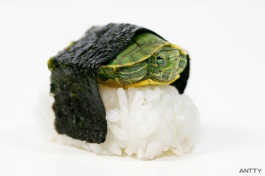 Turtle Sushi by antontang