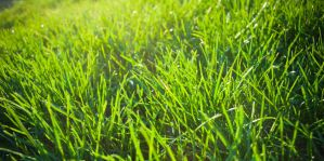 Grass by LeftSideOfRight