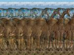 Africa 3D-Stereogram by 3Dimka