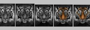 Save The Tiger - Step by Step by sven-werren