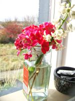 Flowers on a windowsill by Jaybzieh