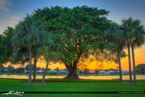 Lake-Catherine-Banyan-Tree-Sunset-at-Park by CaptainKimo