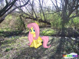 fluttershy outside in the forest by wolfgangthe3rd