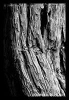 Bark 2 of 6 by dspittard