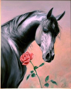 Horse and Rose by stefan69