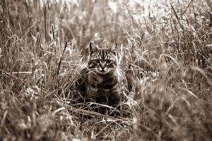 Cat in the Grass by fucute