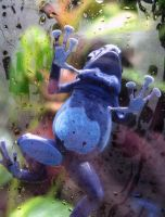 Blue posion dart frog by RossoCorvino